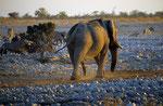 Elefant, Etosha Nationalpark