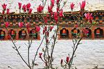 Kuichu Lhakhang Tempel