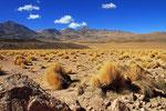 Landschaft im Nationalpark Volcan Isluga, Chile