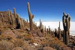 Isla Incahuasi, Salar de Uyuni, Bolivien