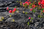 Lava mit Vegetation