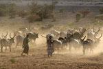 Viehtrieb ín der Nähe von Mekele, Äthiopien