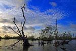 Bigi Pan Naturreservat, Surinam