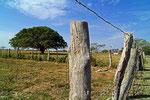 Viehfarm Hato El Cedral, Llanos