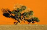 Düne 45, Namib Naukluft Park