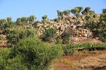 Landschaft bei Kobo, Äthiopien