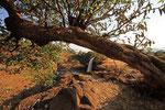 Tissat-Wasserfälle des Blauen Nil