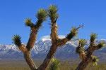 Landschaft bei Pahrump, Nevada