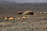 Siedlung in der Danakil-Wüste, Dschibuti