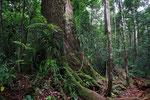 Tanjung Puting Nationalpark, Borneo