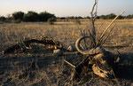 Chobe Nationalpark, Okavango-Delta