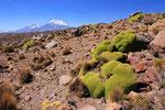 Vulkane Pomerape (6.222 m) und Parinacota (6.348 m), Nationalpark Lauca, Chile
