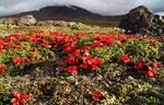 Landschaft am Vulkan Gorelij, Kamtschatka,