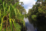 Sekonyer River, Tanjung Puting Nationalpark, Borneo