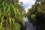 Sekonyer River, Tanjung Puting Nationalpark, Borneo