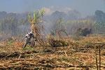 Zuckerrohrernte, Nikaragua