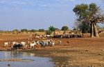 Dorflandschaft, Fada-Ngourma, Burkina Faso