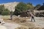 Erntearbeiten bei Samar, Mustang