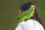Zahme Venezuela-Amazone, Orinoco-Delta
