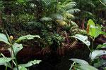 Regenwald, Palulu, Surinam