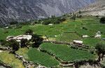 Terassenfelder im Hunza-Tal, Pakistan