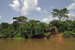 Regenwald, Sangha-Fluss, Republik Kongo