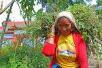 Ernte in der Nähe von Pokhara