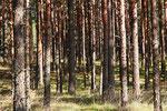 Kurische Nehrung, Litauen