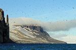 Dickschnabellummen-Kolonie, Lumfjord