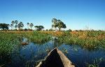 Boro River, Moremi Game Reserve, Okavango-Delta