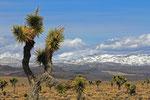 Landschaft in der Nähe von Darwin, Kalifornien