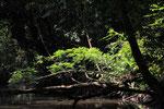 Regenwald, Tortugera Nationalpark, Costa Rica