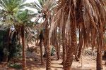 Dorf Shafiabad am Rande der Wüste Dascht-e Lut