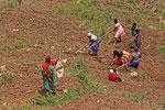 Feldarbeit, Uganda