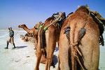 Salzgewinnung am Ass-Ale Salzse, Danakil-Senke, Äthiopien