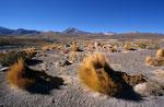 Atacama bei El Tatio, Chile
