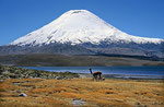 Vulkan Parinacota (6.348 m), Lauca Nationalpark, Chile