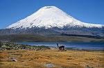 Vulkan Parinacota (6.348 m), Lauca Nationalpark, Chile