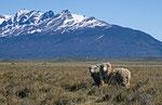 Nationalpark Los Glaciares, Argentinien