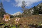 Bergwiese am Vršič Pass, Julische Alpen, Slowenien