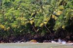 Iles de Salut, Französisch Guayana