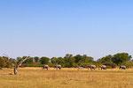 Elefanten, Moremi Game Reserve, Okavango Delta