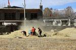 Entearbeiten bei Chuksar, Tibet