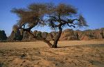 Djado-Plateau, Sahara, Niger