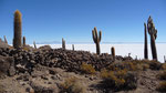 The beautiful Isla de Pescado on the Salt Flats