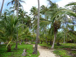 Tayrona National Parc, Thes palm trees reminded me of French Polynesia