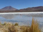 Lagoon with flamingos
