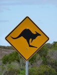 Beware, kangaroos! Don't run them over!