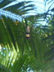 One of the ugly spiders you can find here (this one was maybe 12cm long)