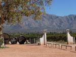 Visit of a vinyard with vine tasting